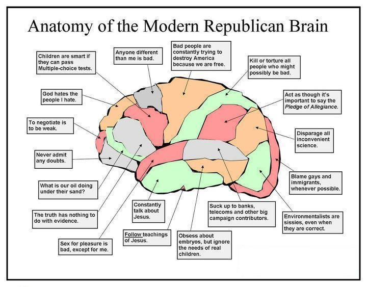 Brain Diagram Politusic